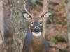 deer1-jpg