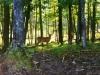 deer5-jpg
